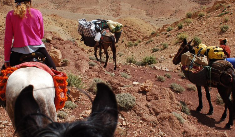 Horseback riding in marrakech morocco